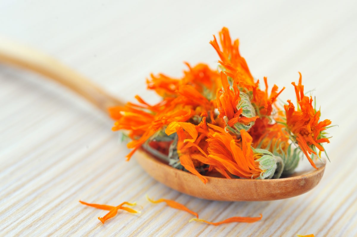 Make Your Own Calendula Salve