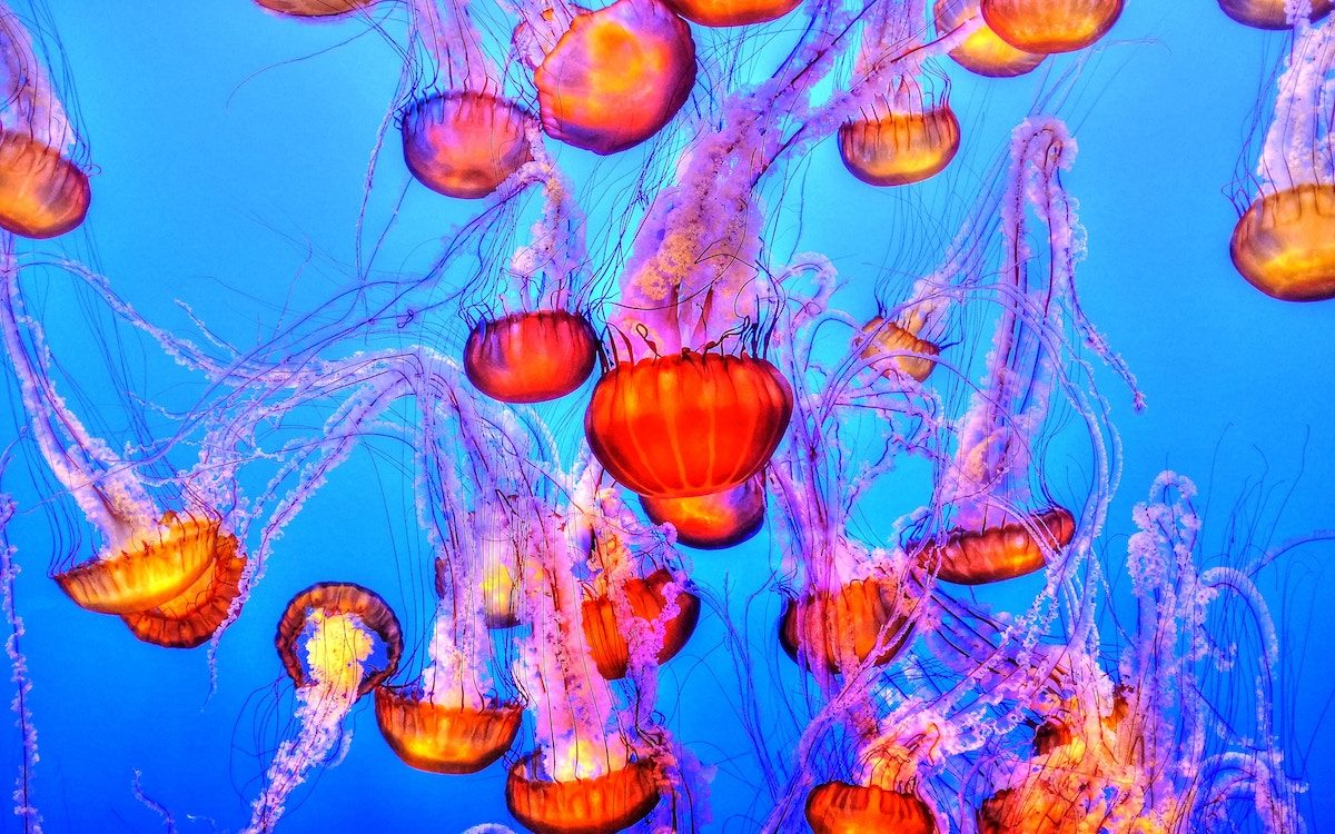 Jellyfish by Francis Taylor