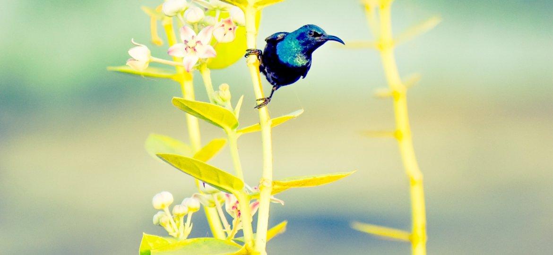 Hummingbird Wisdom