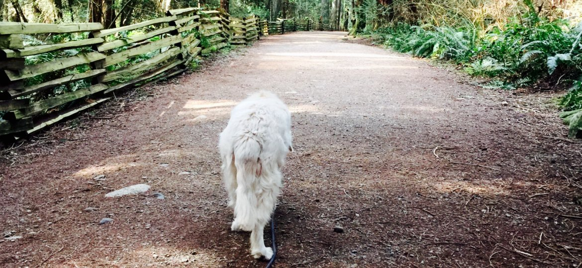 Abby at UBC Trails March 2018